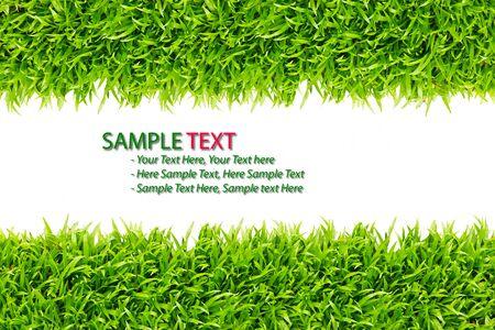 grass frame on white background Stock Photo - 8248257