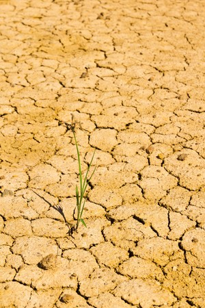 growth grass on dry cracked soil photo
