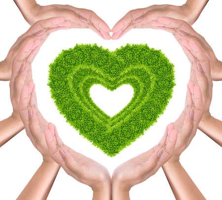 green grass heart in hands photo