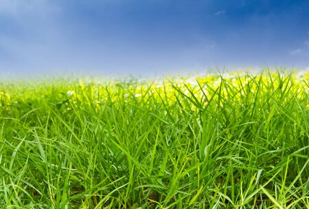green grass against blue sky Stock Photo - 9456638