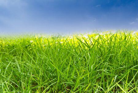 green grass against blue sky Stock Photo - 9456638