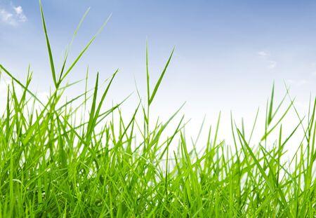 green grass against blue sky Stock Photo - 9456593