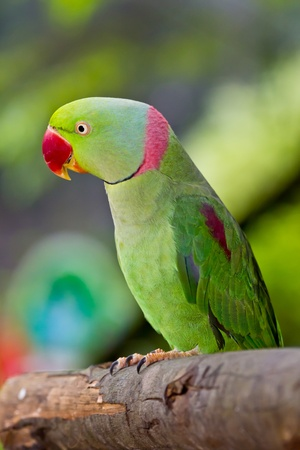 zoo animals: green parrot