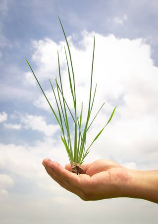 green grass in hand on paddy field photo
