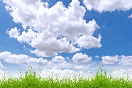 fresh spring green grass against blue sky photo