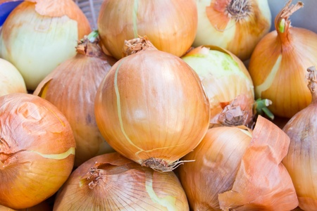 close up of onion in market photo