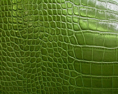 crocodile skin leather: crocodile skin texture Stock Photo