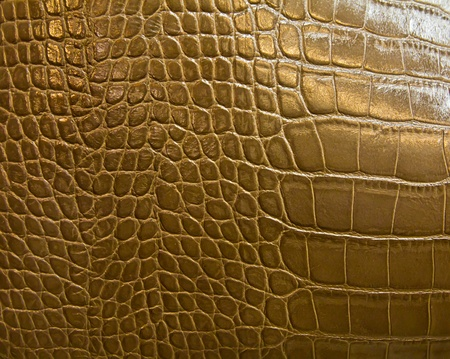 crocodile skin texture photo