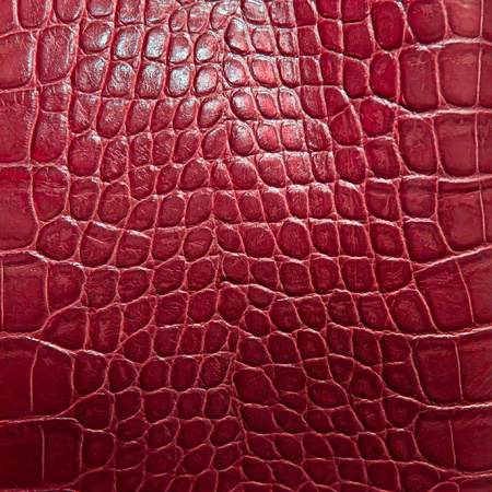 snake skin pattern: crocodile skin texture Stock Photo