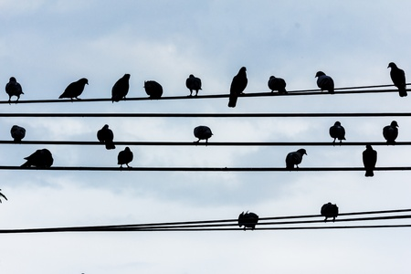 silhouette birds on wire cable against blue sky photo
