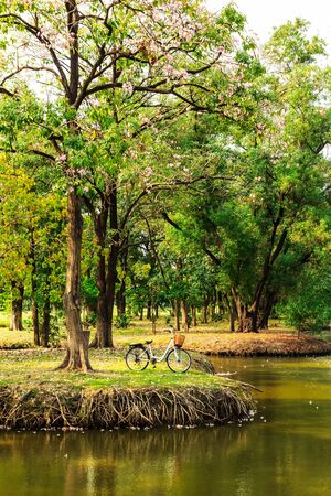 bicycles under big tree in the park photo