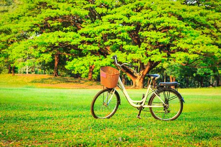 bicycle wheel: bicycles in the park