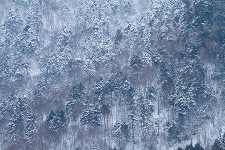 Trees covered by snow on the top of mountain Stock Photo