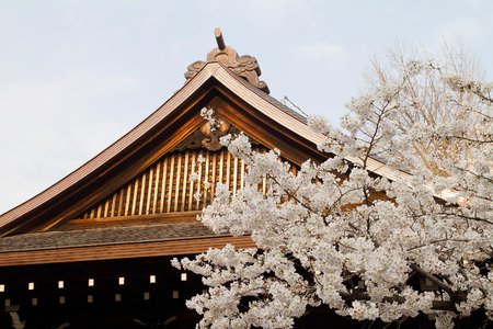 Cherry blossoms with japanese temple Stock Photo