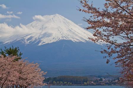 Mt Fuji with sakura Stock Photo