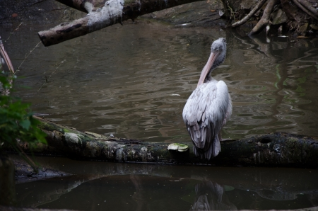 spiritless: Bird Stock Photo