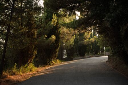 split road: Quiet asphalt road at the Marjan hill in Split, Croatia shaded by trees.