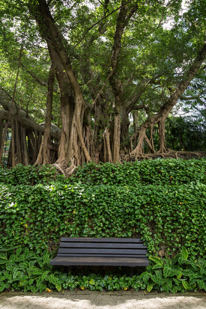 unoccupied: One unoccupied wooden bench in front of vines and under old  big trees at the Hong Hong Park in China. Stock Photo