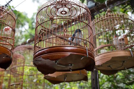 captivity: Birds in cages at the Bird GardenStreetMarket in Hong Kong, China.