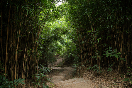 lush: Empty path and steps in lush bamboo forest at the Dragons Back hiking trail in Hong Kong, China.