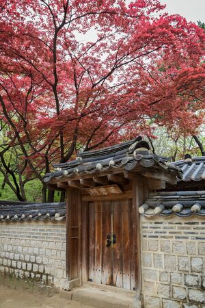 Red and green leaves on trees above a building and stone wall at the Changdeokgung Palace in Seoul, South Korea.