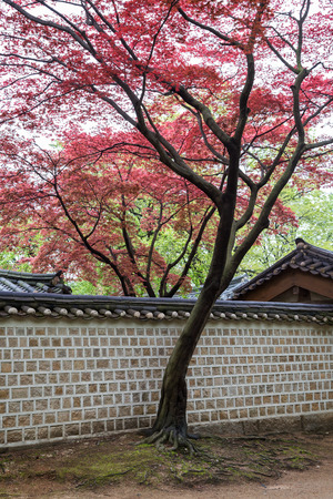 surrounding wall: Red and green leaves on trees above buildings and surrounding wall at the Changdeokgung Palace in Seoul, South Korea.
