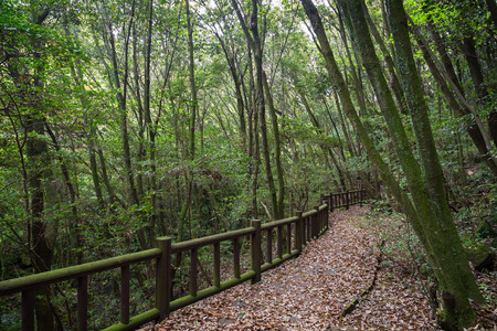 bannister: Walkway full of fallen leaves in a lush and verdant forest on Jeju Island in South Korea. Stock Photo