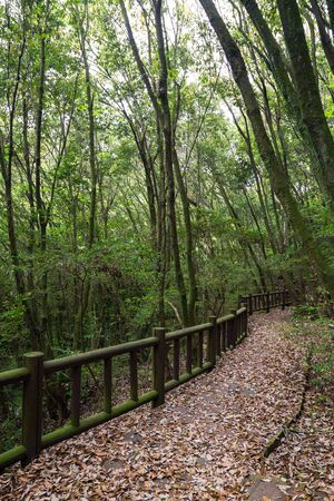 Walkway full of fallen leaves in a lush and verdant forest on Jeju Island in South Korea. Stock Photo