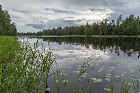 placid: Early evening at a quiet and calm lake, water plants and reflection of a forest in Finland in summertime. Stock Photo