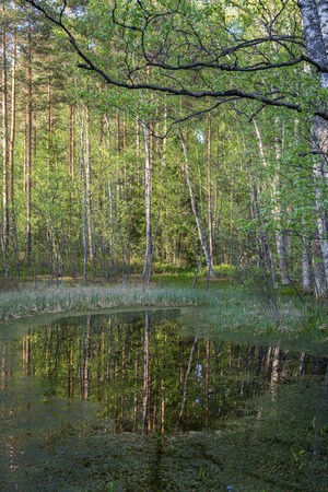 Trees and their reflections on a small pond in a forest in Finland in the summer.