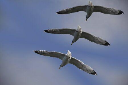 the seagulls: Three seagulls