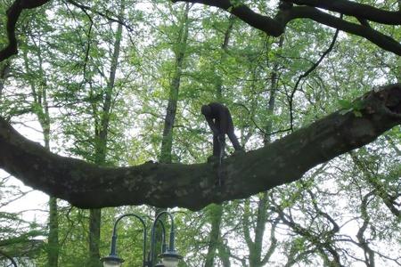 albero: intaglio su albero