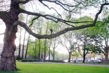 albero: intaglio su albero - taglialegna- amsterdam