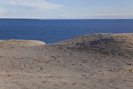 strait of magellan: Panorama of the magdalena island in the strait of magellan  Chile