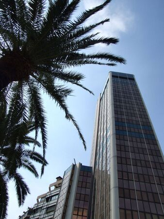 Skyscraper in the downtown - a view with palm trees. Stock Photo - 690378