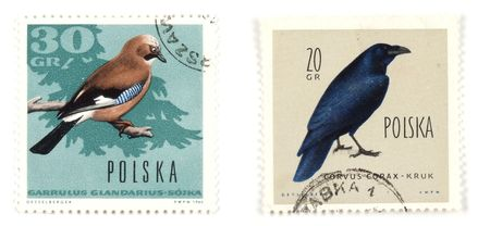 collectible: Collectible stamps from Poland. Set with birds. Stock Photo