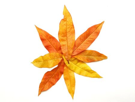 October - fall leaves shaping a star. Colorful autumn. Tree leaf background. Stock Photo - 999452