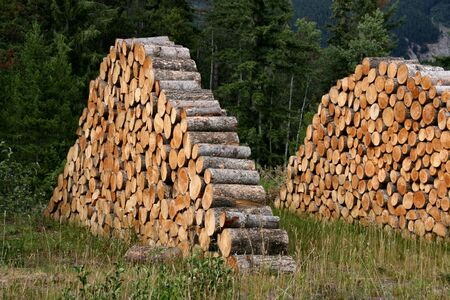 roughing: Stacked firewood - logs ready to be thrown into a fireplace.