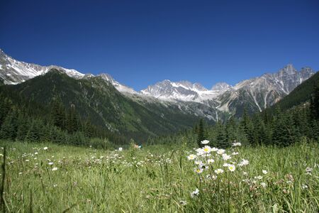 Rogers Pass in Canadian Rockies (Glacier National Park). Focus is on the white flowers. Stock Photo - 1575042