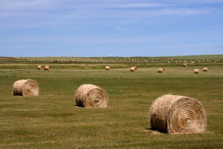 Hay bales. Summertime rural landscape. Alberta prairie fields. Stock Photo - 1778450
