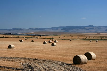 Hay bales. Summertime rural landscape. Alberta prairie fields. Stock Photo - 1960498