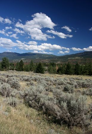 sagebrush: Plant in the foreground is sagebrush (artemisia tridentata). Steppe landscape of British Columbia.
