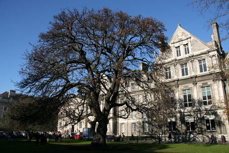 Trinity College campus. Dublin, Ireland. Students in background. Magnificent tree.