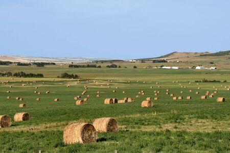 Hay bales. Summertime rural landscape. Alberta prairie fields. Stock Photo - 2735483