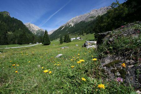 alpen: Shallow depth of field - focus on flowers. Lechtal Alps, Tirol, Austria.