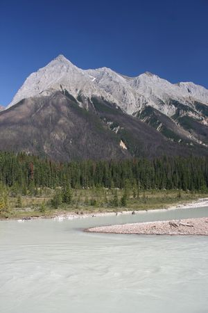forested: Mountain in Yoho National Park, British Columbia, Canada. Forested area of Rocky mountains with clearly visible dying trees due to epidemic of mountain pine beetle infestation (Dendroctonus ponderosae) Stock Photo