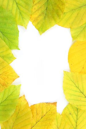 Autumn - colorful October tree leaves. Frame made of beech tree leaves. Stock Photo - 3658464