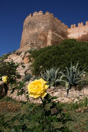 andalucia: Focus on yellow rose flower. Alcazaba - Moorish castle of Almeria in the background.