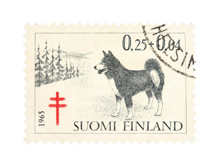 collectible: Collectible old stamp from Finland. Stamp with husky dog.