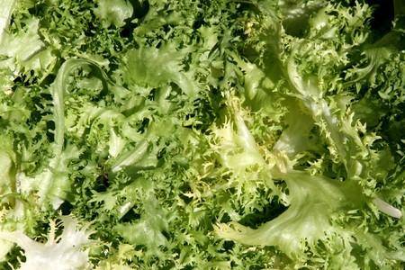 endivia: Endivia - verde vegetal similar a la lechuga. Hortalizas frescas de fondo.